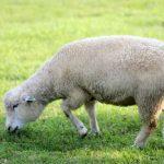 世の罪を取り除く神の小羊[ヨハネ1:19-42]