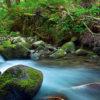 生きた水が川となって流れ出る[ヨハネ7:1-52]